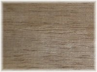 Black Walnut (American)